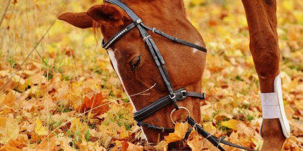Lancering Wheels & Horses