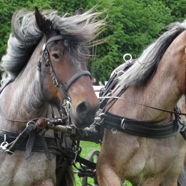 Power Horse Competition